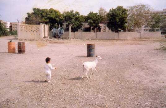 Jessica chasing a Billy Goat